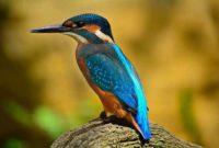 Istilah Dalam Jual Beli Burung