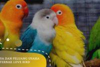 ternak love bird