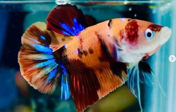 Plakat Nemo Galaxy