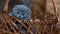 tips memelihara kucing dikandang sendiri
