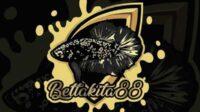 Gambaran Ikan Cupang Warna Hitam Emas